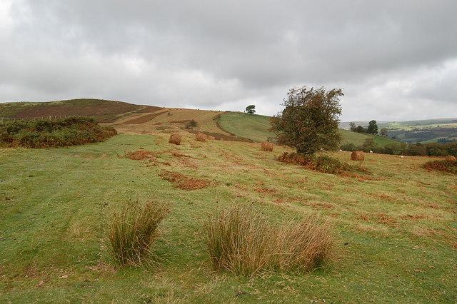 Drove road looking towards Twyn Disgwylfa