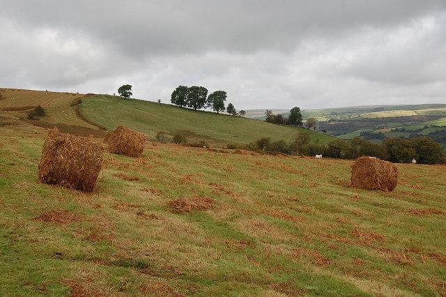 Bales of Bracken
