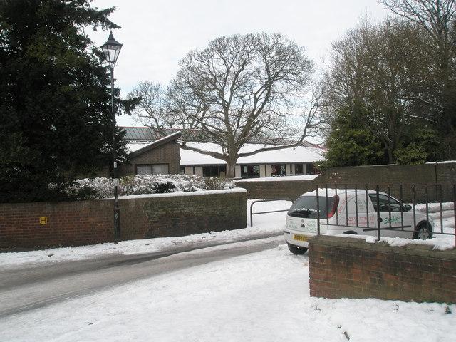Stark winter tree outside Bosmere Junior School