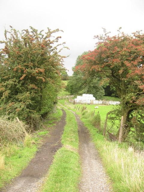 Road to Farmland