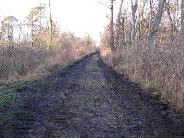 Footpath through Chippenham Fen