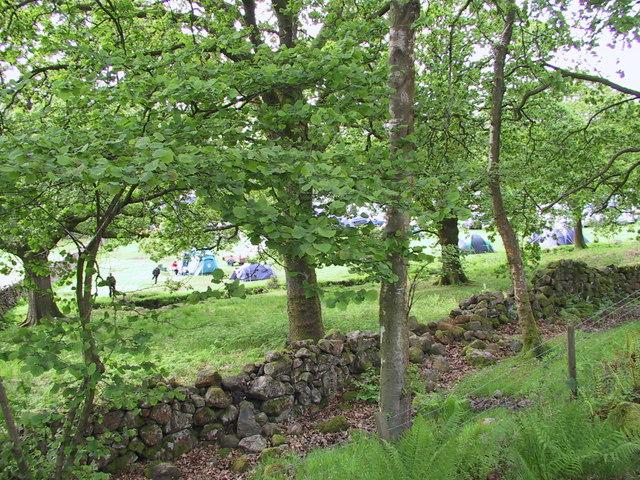 Fisherground Campsite through the trees