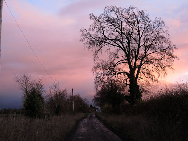 Track from Chippenham Fen