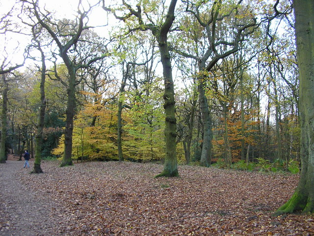 Autumn Colours in Hirst Wood