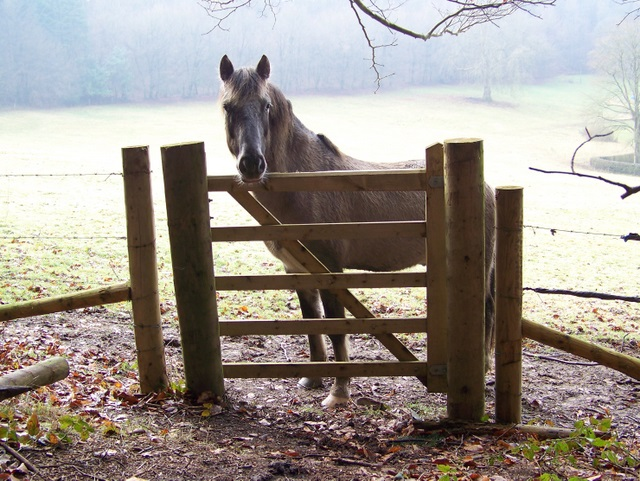 Waiting by the gate, Wardour