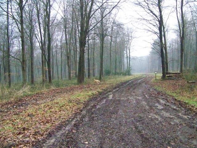 Woodland track, West Wood