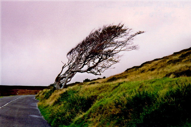 Injebreck Hill - Tree growth determined by wind