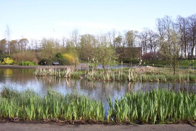 Pond, Maxwell Park
