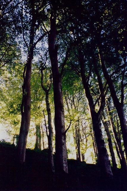 Glen Helen - Trees on hillside along south side of glen