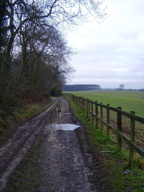 Track near Melton wood car park.