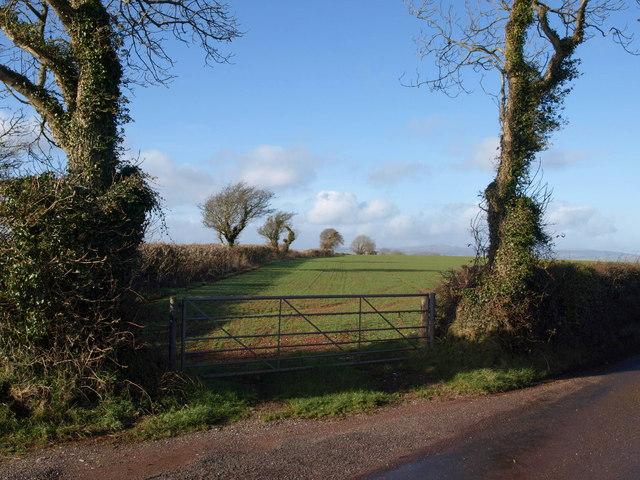 Trees along Wrigwell Lane