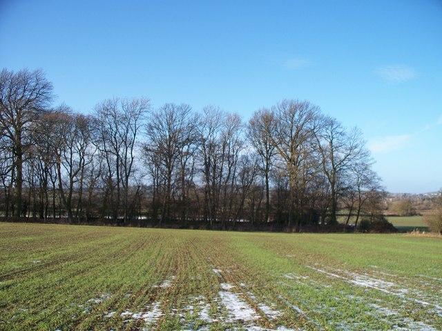 Ivy Ground Spinney