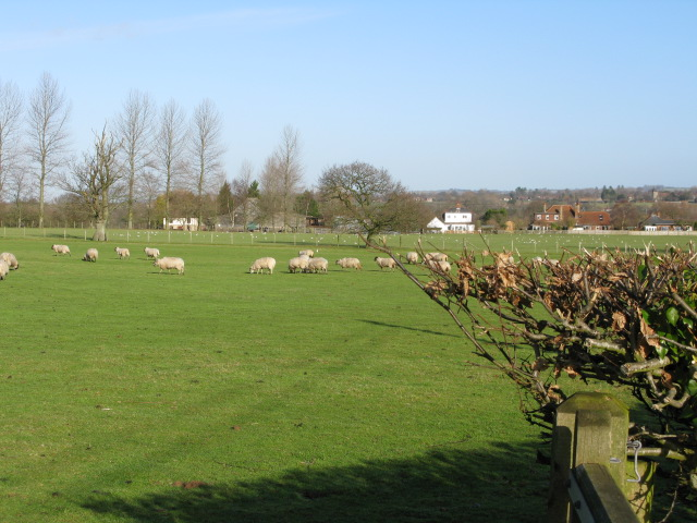 Looking NE towards Broad Oak