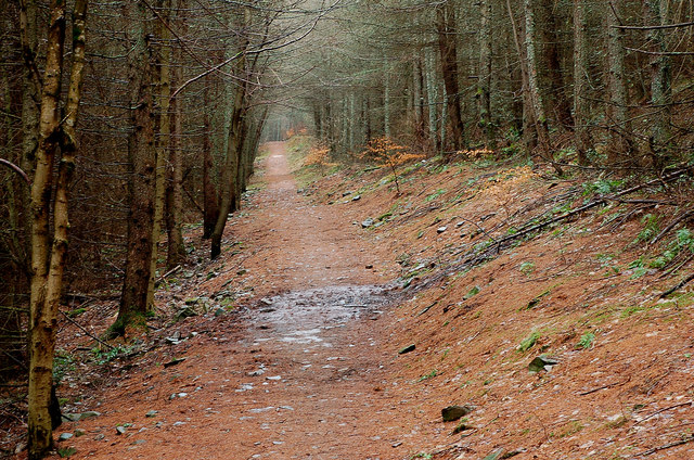 Forest path from Innerleithen