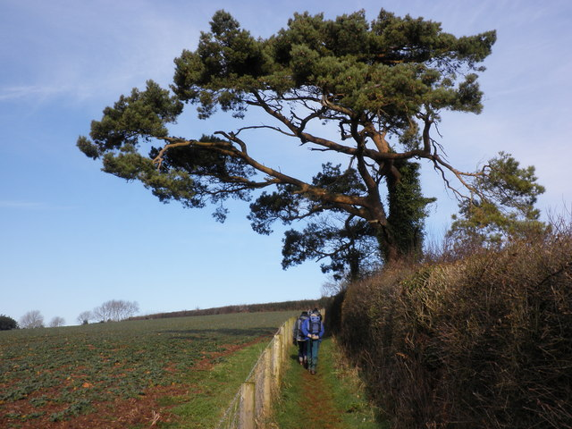 Footpath, above Livingshayes