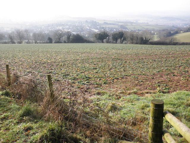 Field, above Silverton