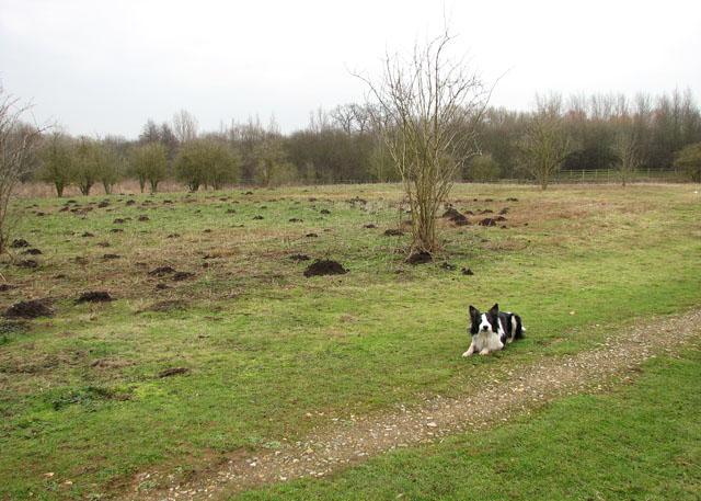 Molehills in marsh meadow