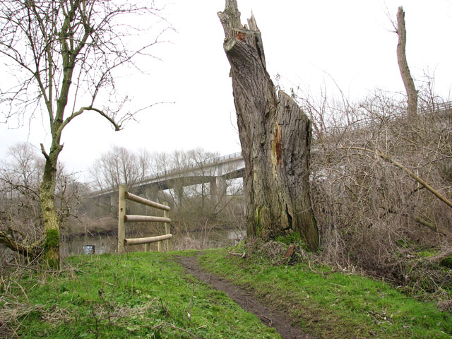 Remains of a tree beside the path