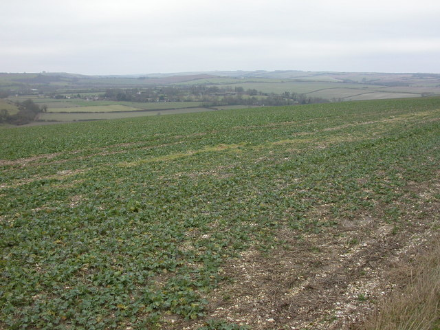 Knowle Hill, beet