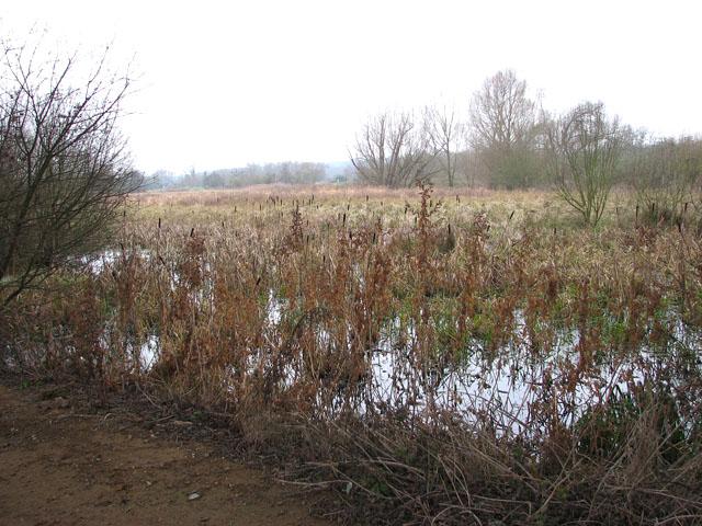 Whitlingham Marsh