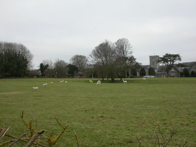 Broad Chalke, sheep