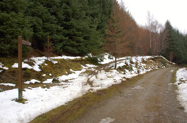 Path junction in Caberston Forest