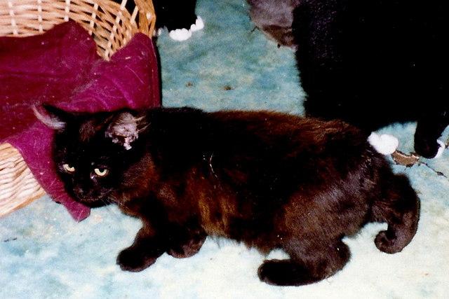 Ballaugh - Manx Cats