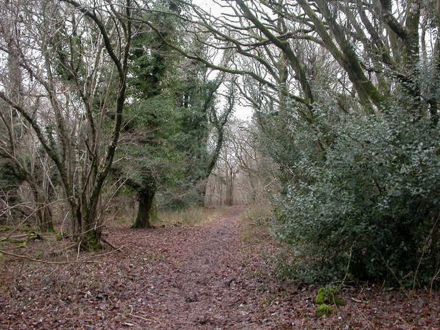 Martin Down, woodland