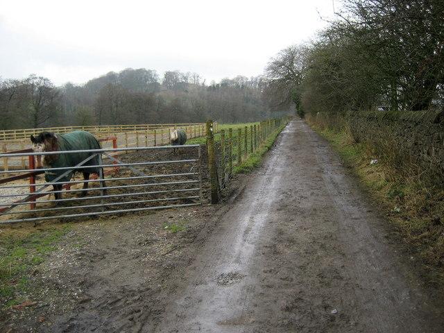 Ribble Way near Clitheroe