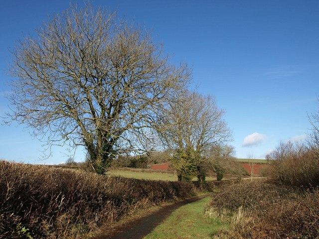 Path northeast of Marldon
