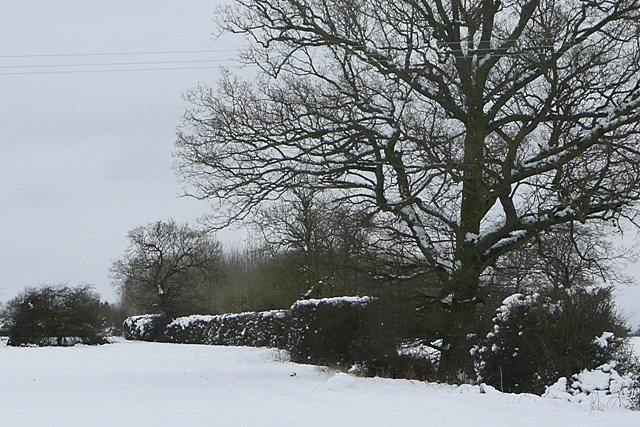 Footpath to Stratfield Saye
