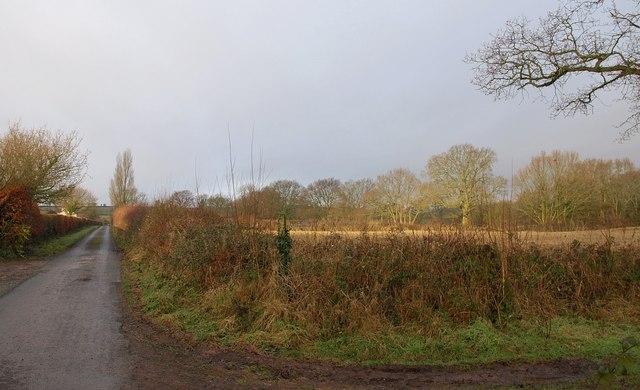 Lane near Weekmoor