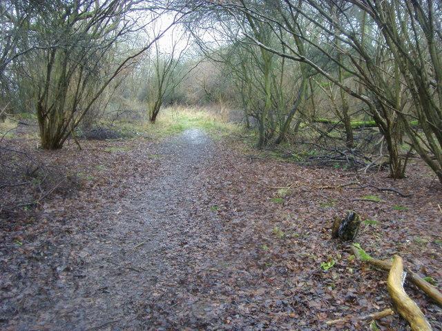 Piddington Wood