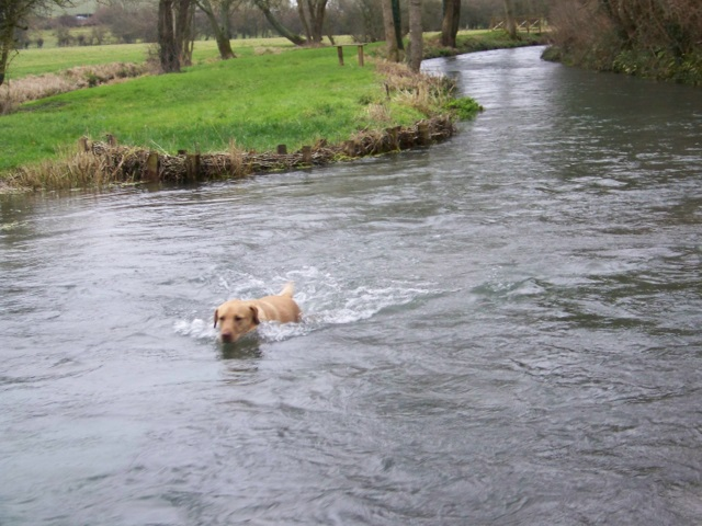 Paddling upstream, Bishopstone
