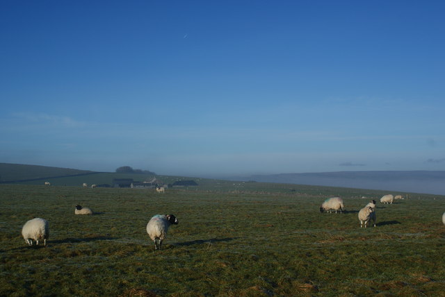 Sheep on Longstone Moor