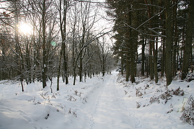 Forest track, Fotheringham Hill