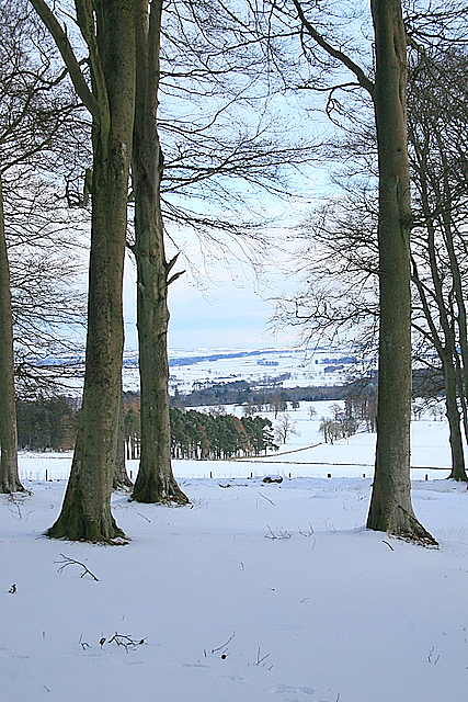 Looking East, Fotheringham Hill