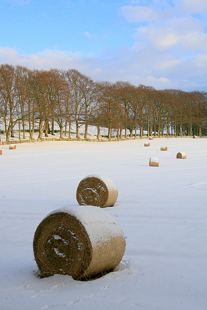 Snowy hay bales, Hill of Lour