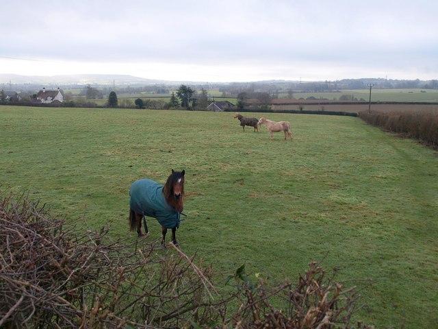 Field, Higher Bickley