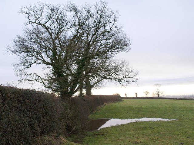 Field boundary and puddle, Higher Bickley