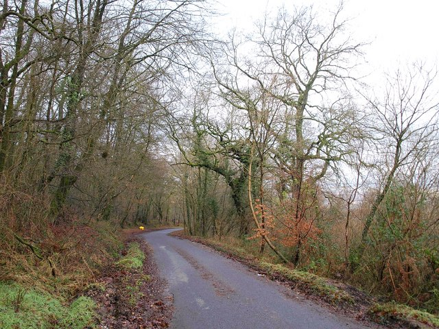 Road through Buckland Wood