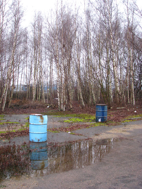 The Deal Ground - a stand of birch trees