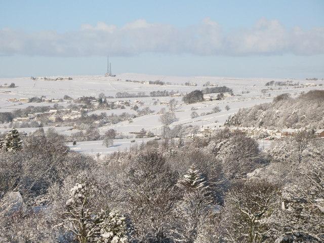 Catton in the snow