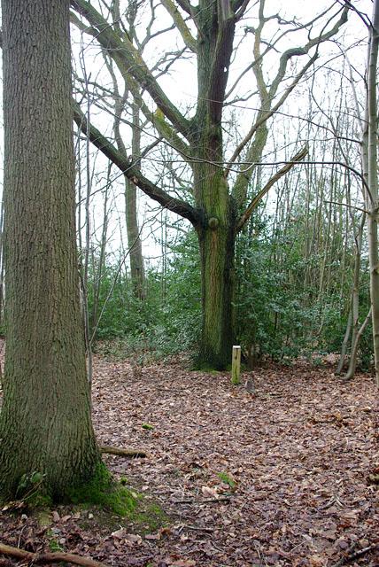 In Great Earls Wood