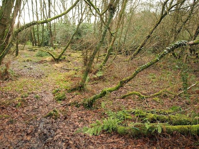 Damp woodland, Wiltown valley