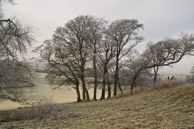 Winter frost on trees near N61 Newpark