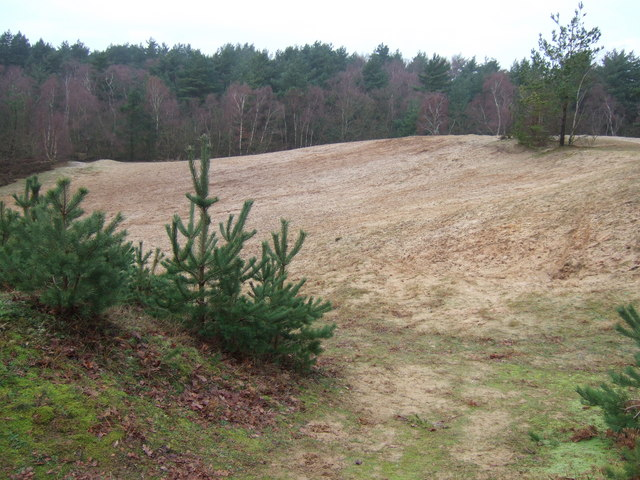Sand hills in the woods