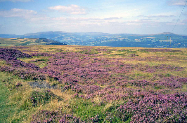 Heather moorland at Pwll-du