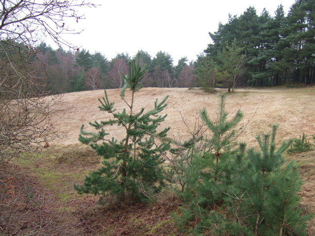 Sand hills in Wootton Woods (Ling Common)