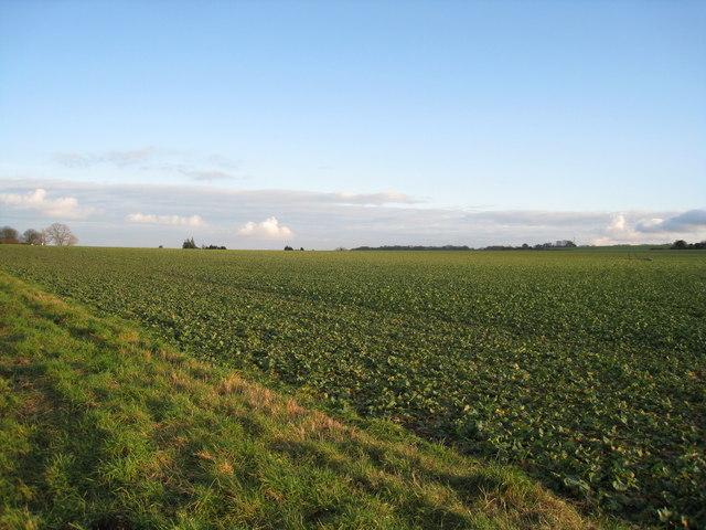 Farmland south of Cliddesden